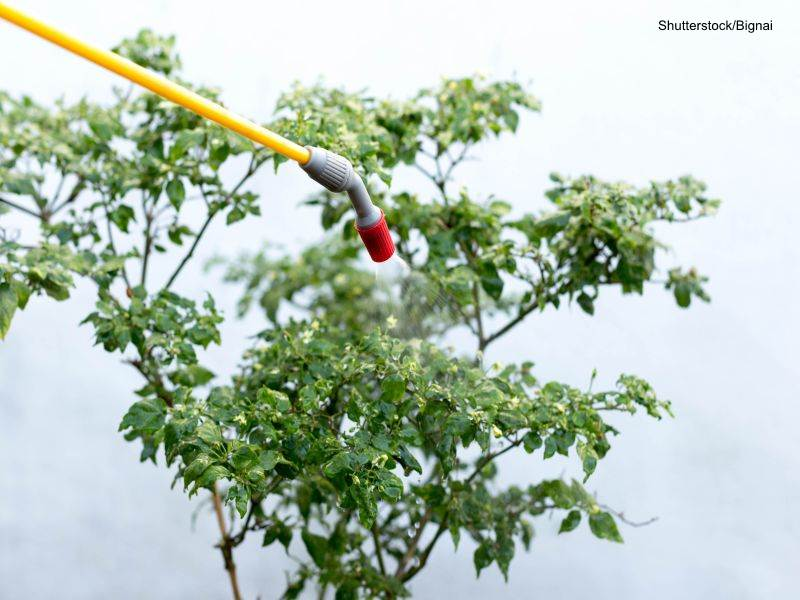 Herbicidas en parques y jardines públicos. Navalcarnero