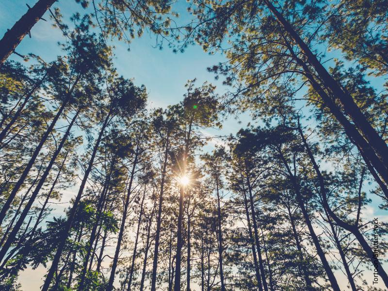 Vista del sol a través de un bosque