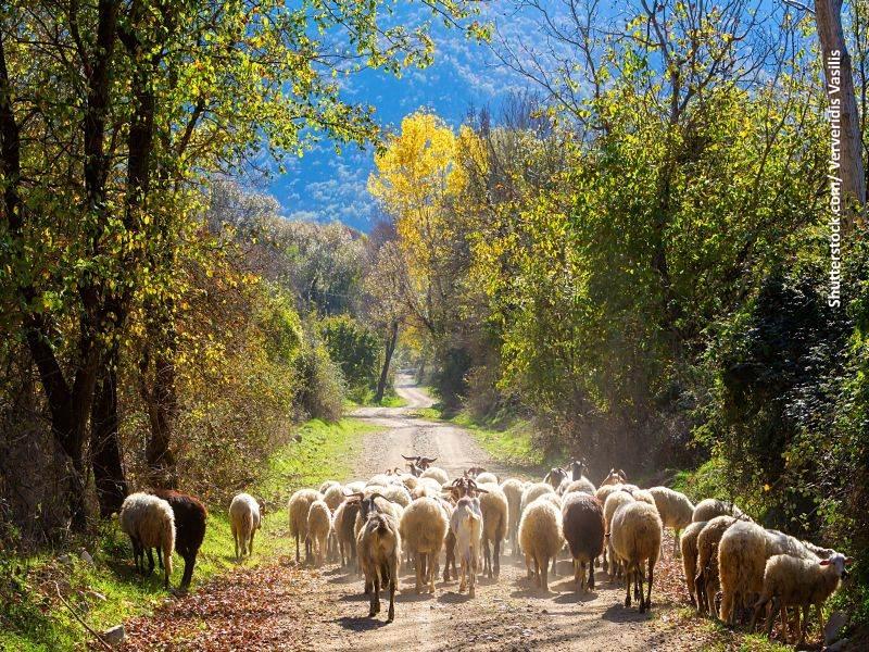 Protección ambiental de montes incendiados. Asturias