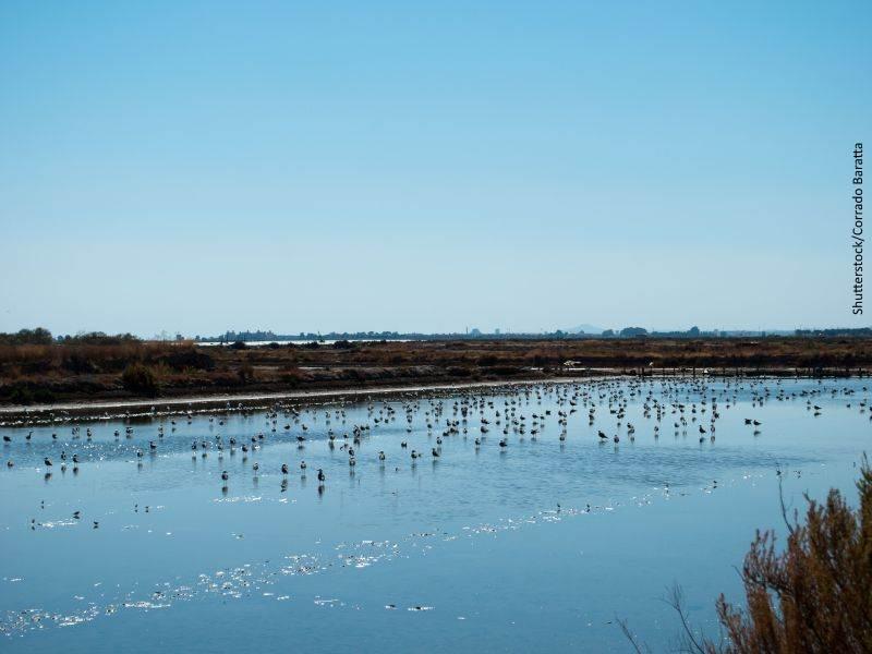 Lagunas con fauna en el parque nacional de Doñana