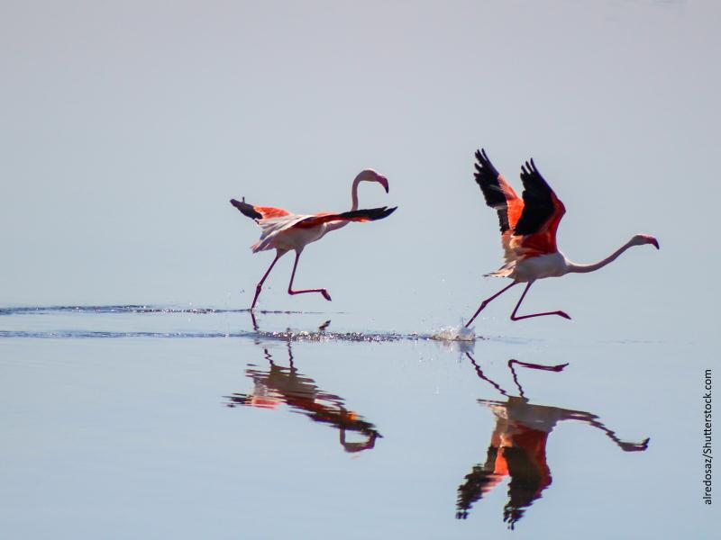 flamencos sobre el agua