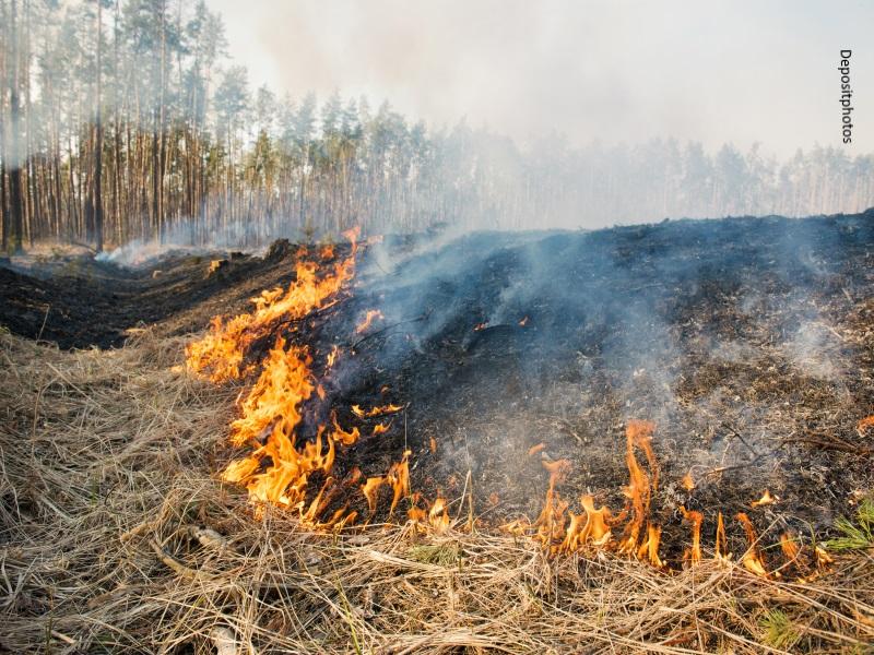 quemas agrícolas